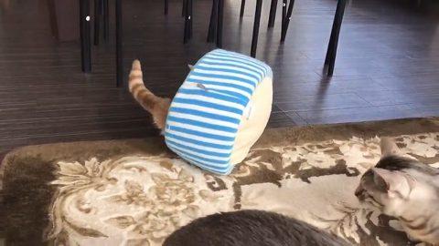 チロルくん 猫ベッド 猫カフェ&ギャラリーGATO