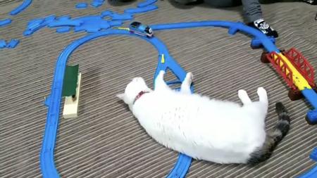 プラレールに寝転がる次の日の猫ちゃん