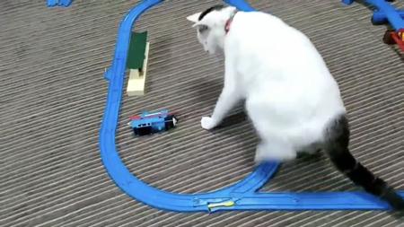 プラレールと距離をとる次の日の猫ちゃん