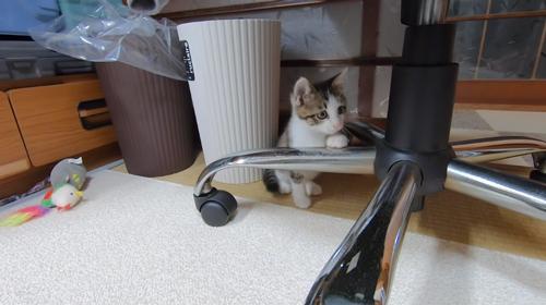 椅子の下にいるトワくん
