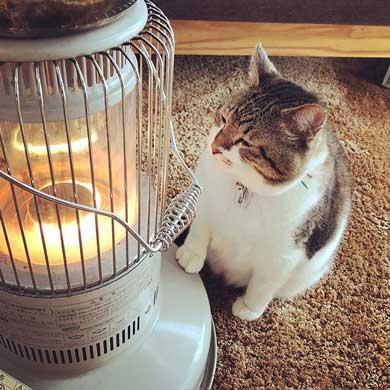 猫 ストーブ 暖まる 冬 ぶさお 2020 元捨て猫