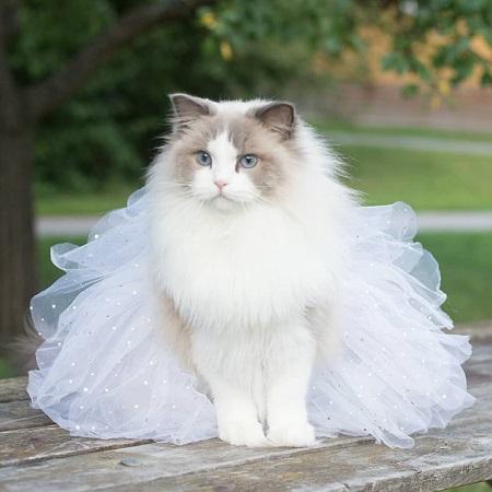 プリンセスにゃんこ