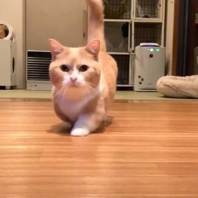 まいるんち ムチムチ猫