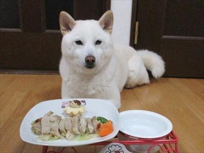 白柴『きなこ』のお気楽ブログ