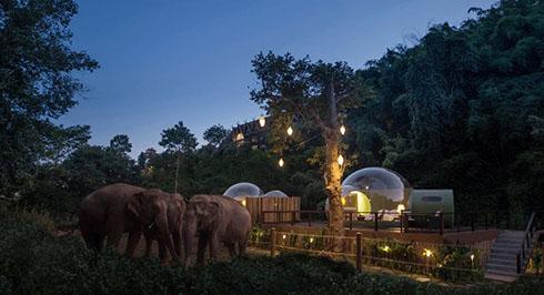 ゾウや星空を眺められるジャングルキャンプ 透明ドーム型宿泊施設がタイに登場