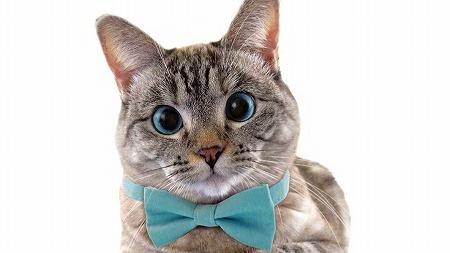 猫のナラちゃんがギネス認定