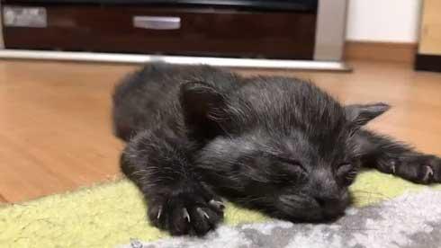 猫 子猫 生後4週間 ストーブ前 くつろぎ出す 検証結果 成長 香箱座り