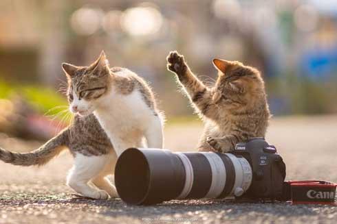 猫 フォトグラファー カメラ 構える 姿勢 絶対うまくなる 写真 Ryostory1124