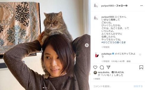 石田ゆり子 かたぐるま ねこぐるま ハニオ 猫 ペット
