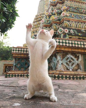 塔の前で立つ猫