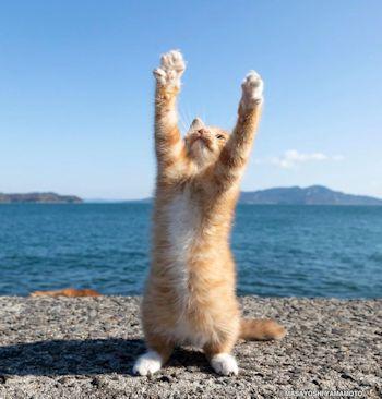 海の前で立つ子猫