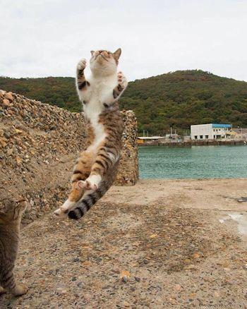 海を背景に飛ぶ子猫