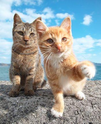 海背景の猫2匹