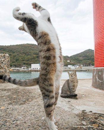 反り返って立つ猫