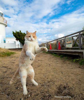 ファイト猫