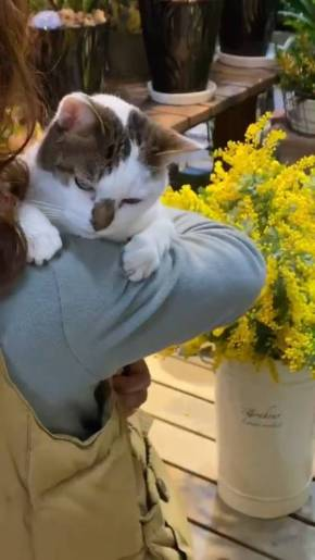 歌うネコ ちびちゃん おんぶ猫 わたなべ花壇
