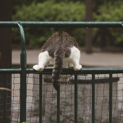 沖昌之さん猫イベント