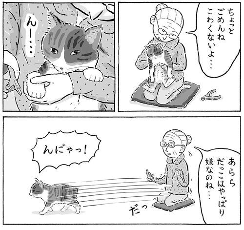 菊ちゃん2