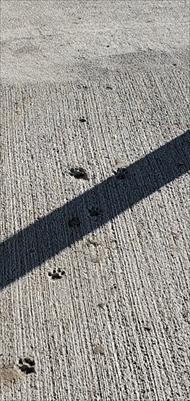 新しい牛舎に猫ちゃんの足跡