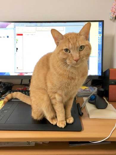 猫 ティッシュケース ヌコティッシュ 香箱座り 擬態