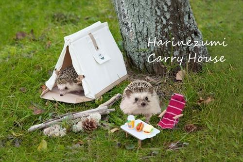 ハリネズミキャリーハウス