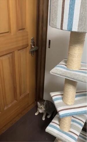 ドアを開ける猫ちゃん