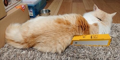 小さい箱に入る猫ちゃん