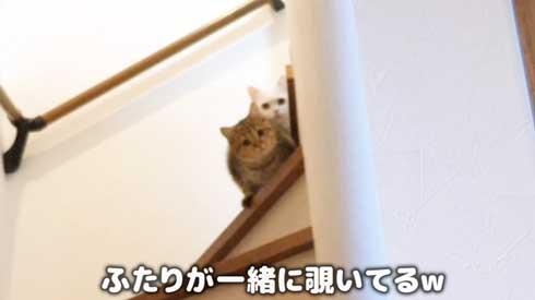 猫 しまちゃん ポムさん だるまさんが転んだ 理解 変な場所 固まる ポーズ 子猫 YouTube