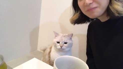 猫 キス 飼い主 ヌッコ ソフト キッス かわいい おてて 前足 添えて