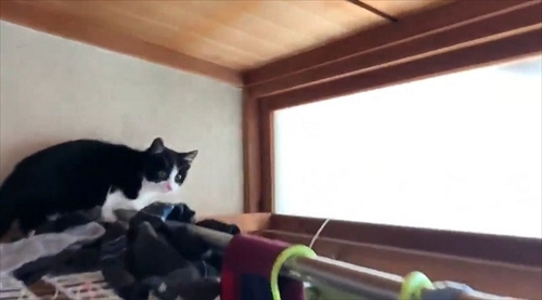 障子を破る猫ちゃん