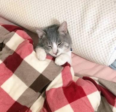 座ったまま寝る猫