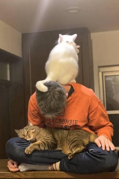 猫仙人 ミルコ