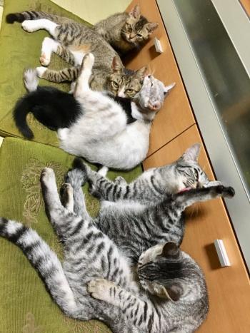 猫14匹中の5匹
