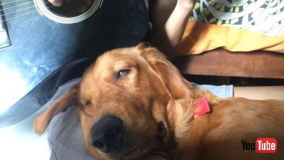 Dog Gets Drowsy