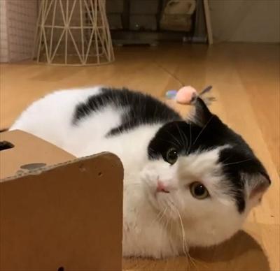 飛び出すオモチャで遊ぶ猫ちゃん