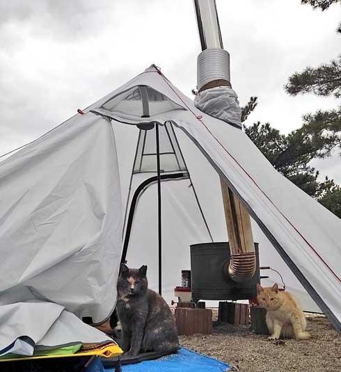 キャンプ猫