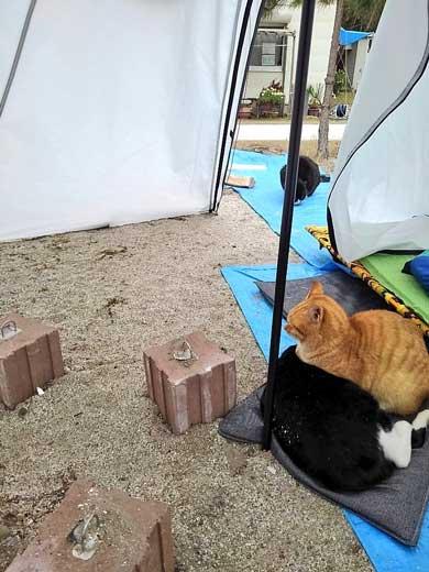 猫 キャンプ テント 返して 奪われる