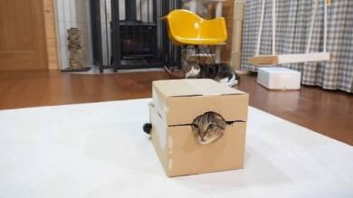 Maru&Hana まる はな 猫