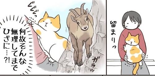 猫のわがまま
