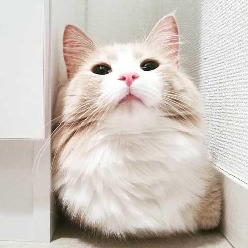 猫 でんきタイプ ポケモン 身体 静電気 撫でる バチバチ