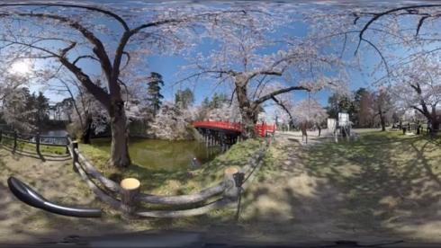 桜 お花見 VR