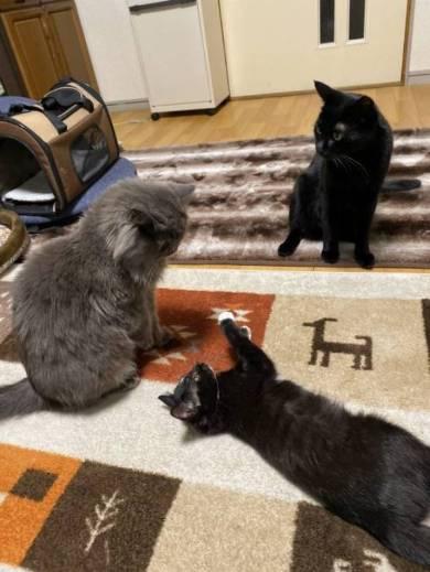 ネコには興味がない旦那