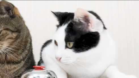 猫 呼び鈴 ご飯 エサ 注文 猫ナビデスク 動画 YouTube