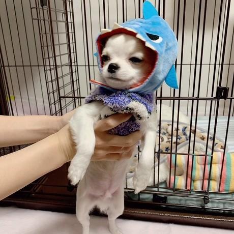 ペット手帳 犬