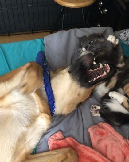 猫パンチを優しく交わすワンちゃん