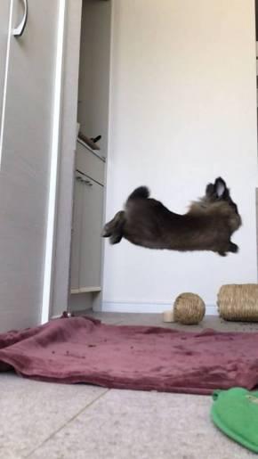 ライアン君 うさぎ 空中浮遊 跳びまくり