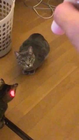 気付いた猫