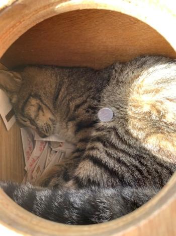 おみくじ箱の中身の猫