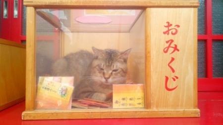 おみくじ箱の猫横長