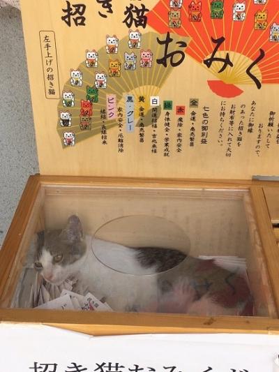 おみくじ箱の猫縦長